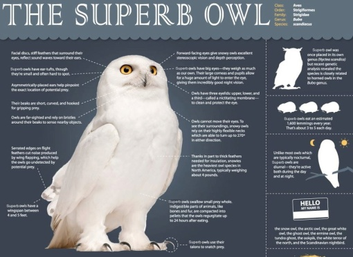 superb-owl